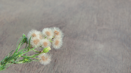 Wildflowers on an old wooden table Stock Photo