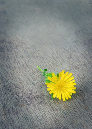 Dandelion on old wooden table Stock Photo