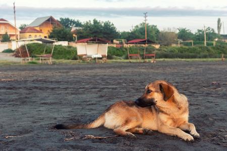 Homeless dog on sand