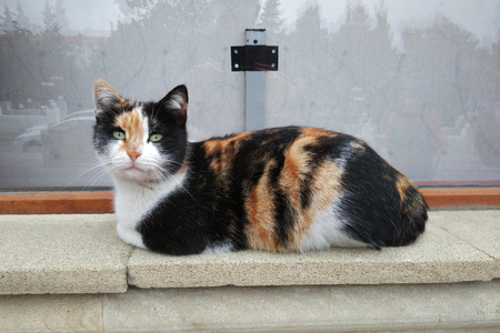 Tricolor cat on the sidewalk 写真素材