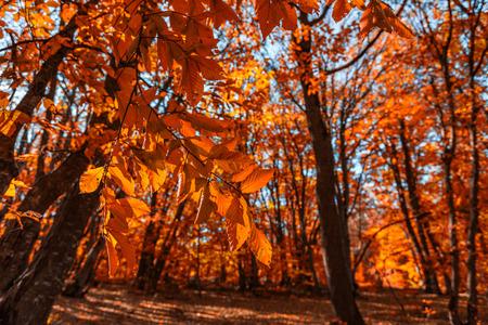 Paysage de forêt d'automne coloré