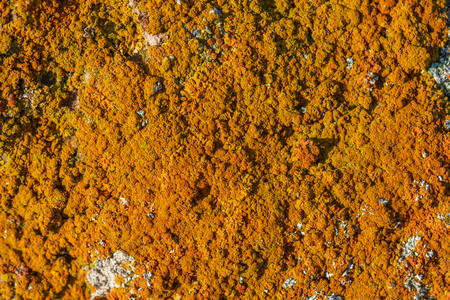 Yellow moss on a rock background