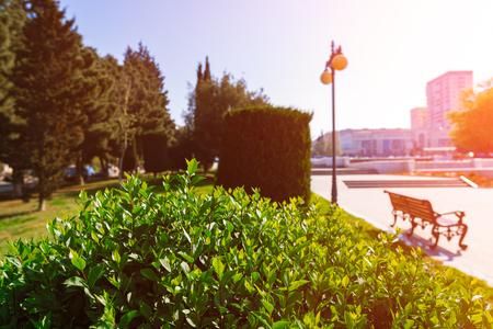 Green bush in the spring city park 免版税图像