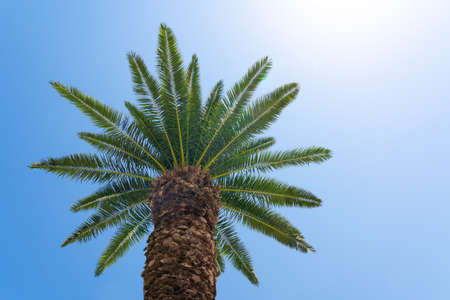 Palm tree against the blue sky 版權商用圖片