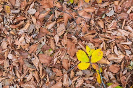 Dry autumn leaves in the forest