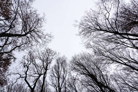 Bare crowns of trees against the sky