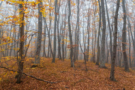 Foggy yellow autumn forest landscape
