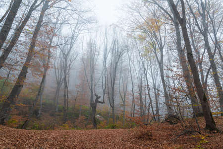 Foggy bare autumn forest landscape Archivio Fotografico