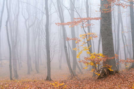 Mysterious autumn forest in foggy weather