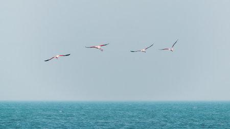 Pink flamingos in flight over the sea Zdjęcie Seryjne