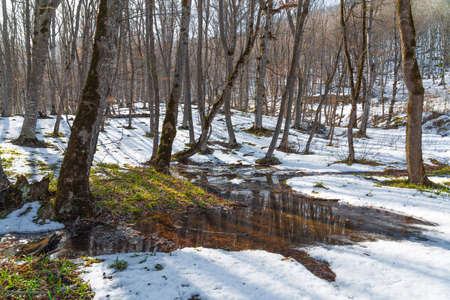 Spring thaw in the forest