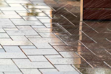Wet sidewalk in the park Standard-Bild