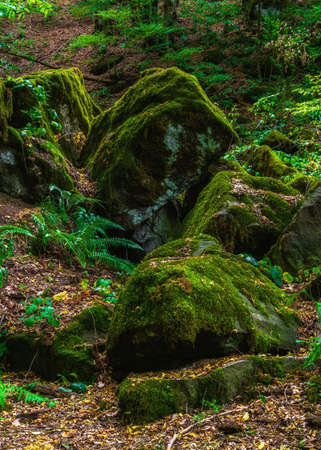 Boulders overgrown with moss in the forest
