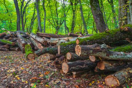 Sawed trees in a green forest Standard-Bild