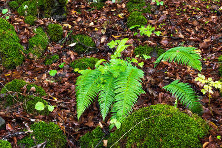 Fern in a wet forest