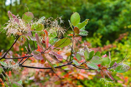 Water droplets on tree leaves Standard-Bild