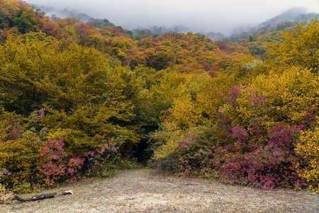 Fog over mountain autumn forest
