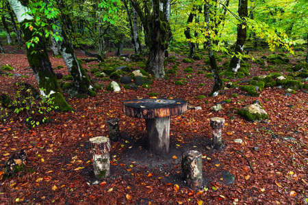 Picnic spot in the forest