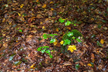 Yellow autumn leaf in the forest