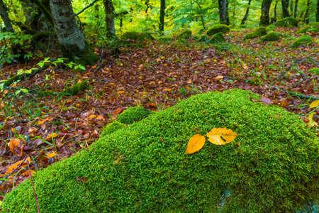 Yellow autumn leaf in mossy stone Standard-Bild