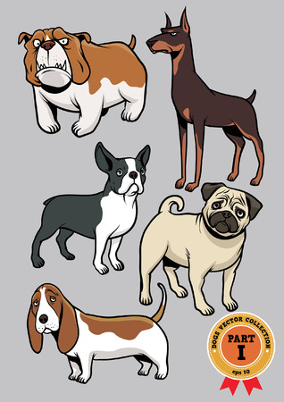 boston terrier: Dog collection part 1 Illustration