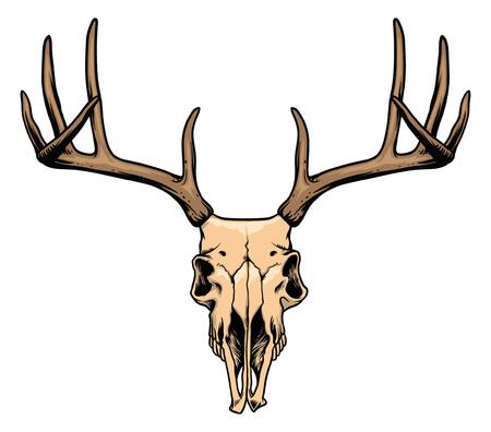鹿の頭蓋骨の手描き  イラスト・ベクター素材