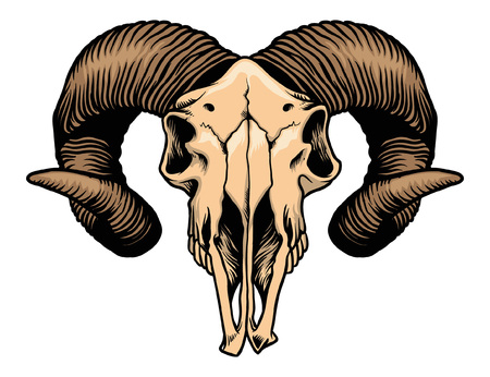 Hand drawing of ram goat skull.