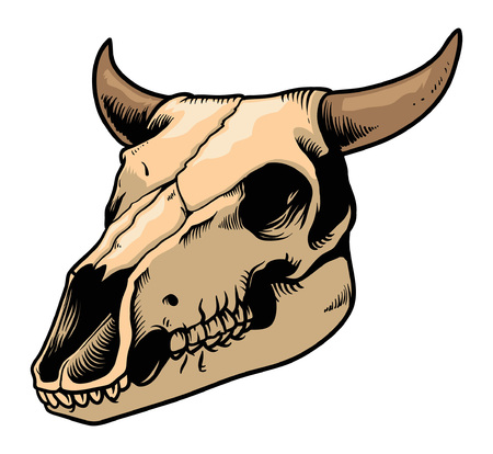 Hand drawing of skull of a bison. Illustration