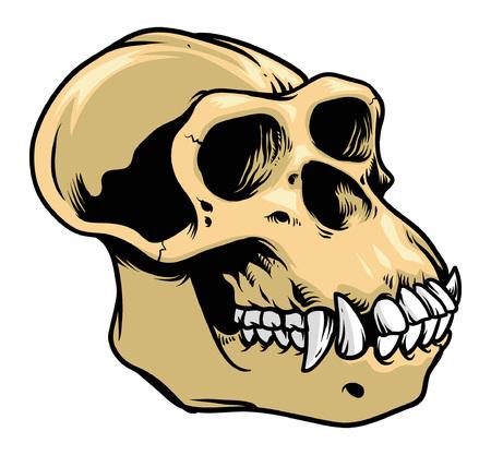 Hand drawing of skull of gorilla 向量圖像