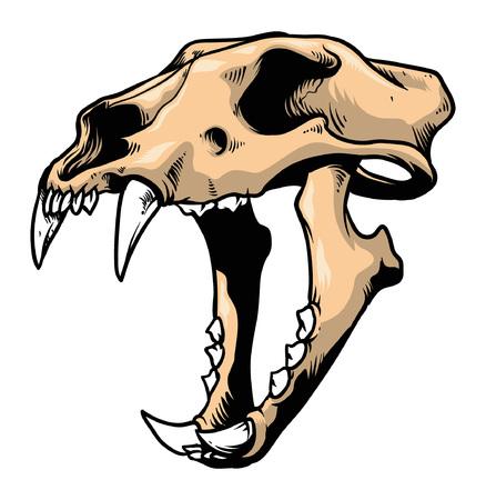 虎の頭蓋骨の手描き  イラスト・ベクター素材
