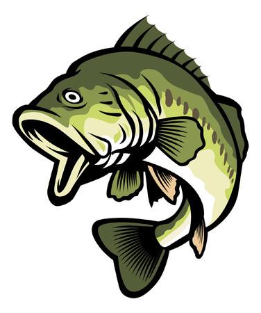 淡水オオクチバス魚イラスト。  イラスト・ベクター素材