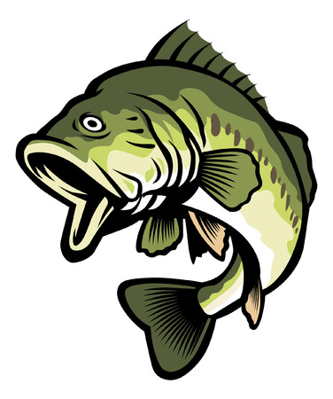 Freshwater largemouth bass fish illustration.