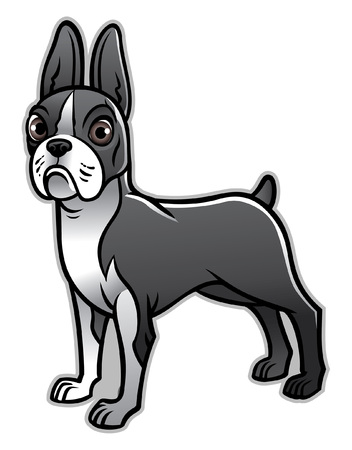 cartoon of boston terrier