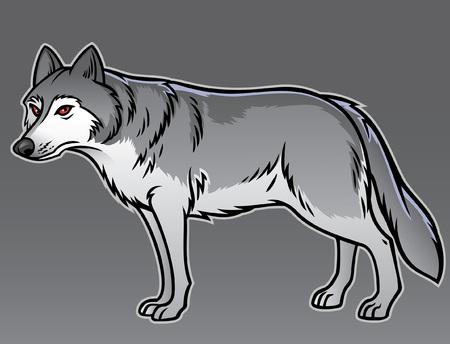 grey wolf Illustration