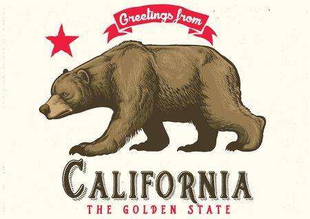 hand drawn of californian brown bear  イラスト・ベクター素材