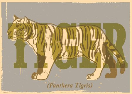 vintage illustration of tiger