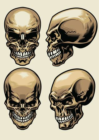 set of human skull in various perspective Illustration
