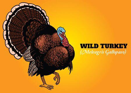 handdrawn detailed of wild turkey 矢量图像