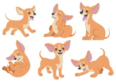set of chihuahua cartoon character