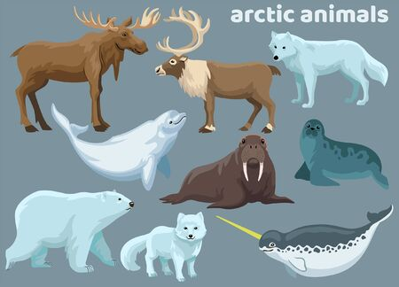 set vector of arctic animals collection