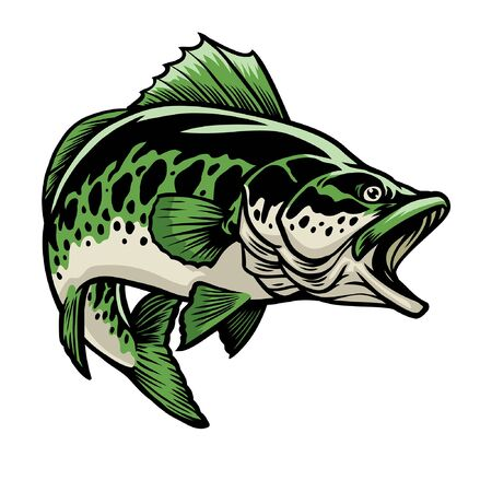 big largemouth bass fish