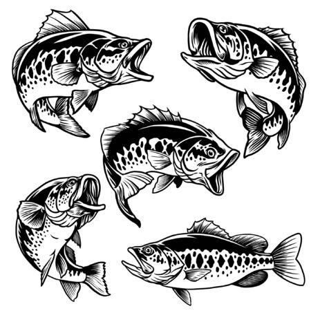 set bundle of largemouth bass illustration