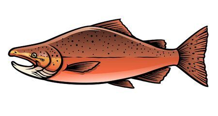 vector of red sockeye salmon
