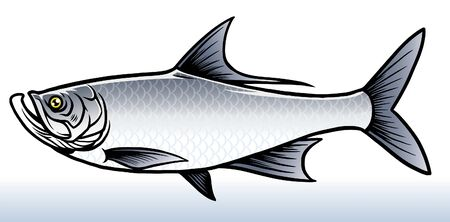 vector of tarpon fishing Stock Illustratie