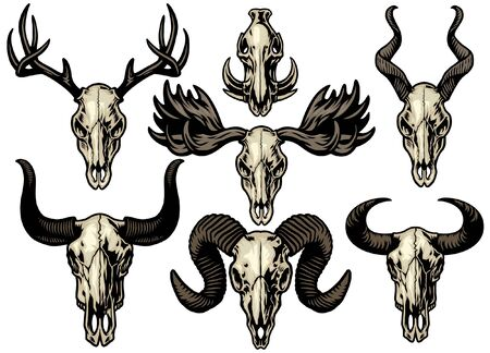 set collection of animal skull