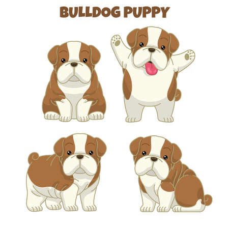 set cute bulldog puppy