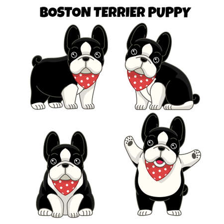 vector set of boston terrier puppy dog