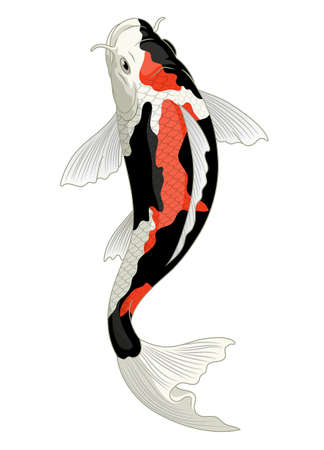 japan koi fish in showa coloration pattern