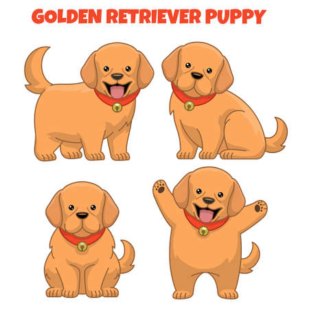 set of golden retriever puppy dog