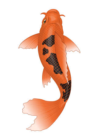 koi fish in orange with black spot colors